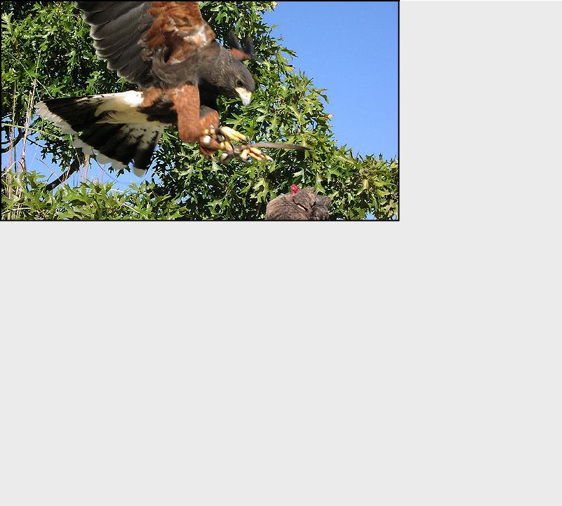 Fal-Tech inc  - Bird Control Services - Roger Crandall